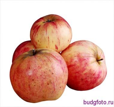 Яблоки на белом фоне