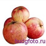 """Предметная фотография""""Яблоки"""""""