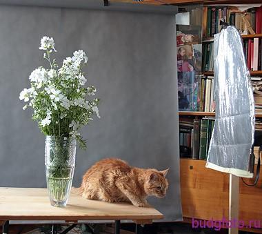 кот и букет