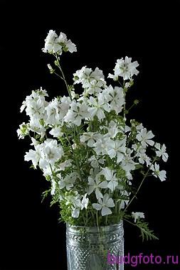 букет белых цветов на черном фоне
