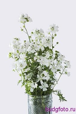 букет белых цветов на белом фоне