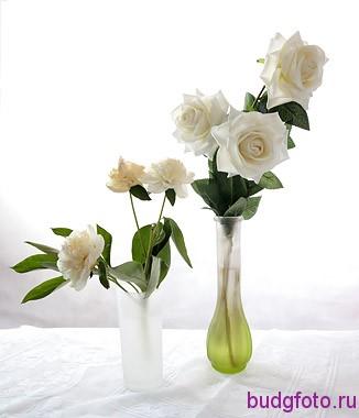 белые розы на белом фоне